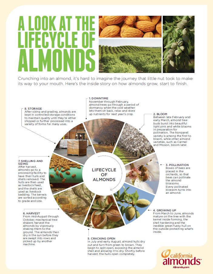 lifecycle_of_almonds